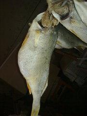 Рыба вяленая, копченая, мороженая